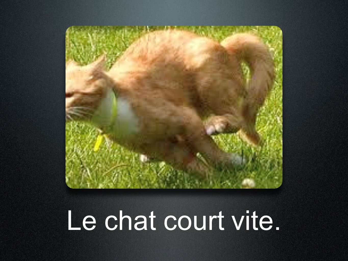 Le chat court vite.