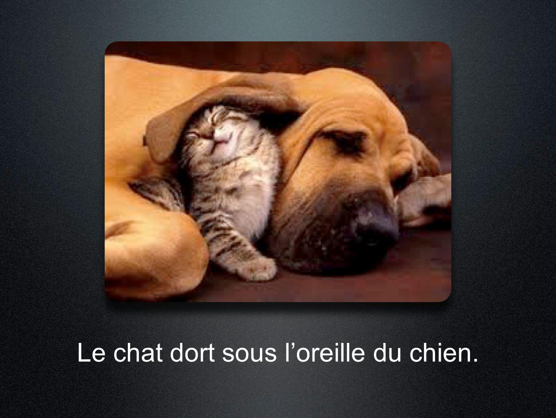 Le chat dort sous l'oreille du chien.