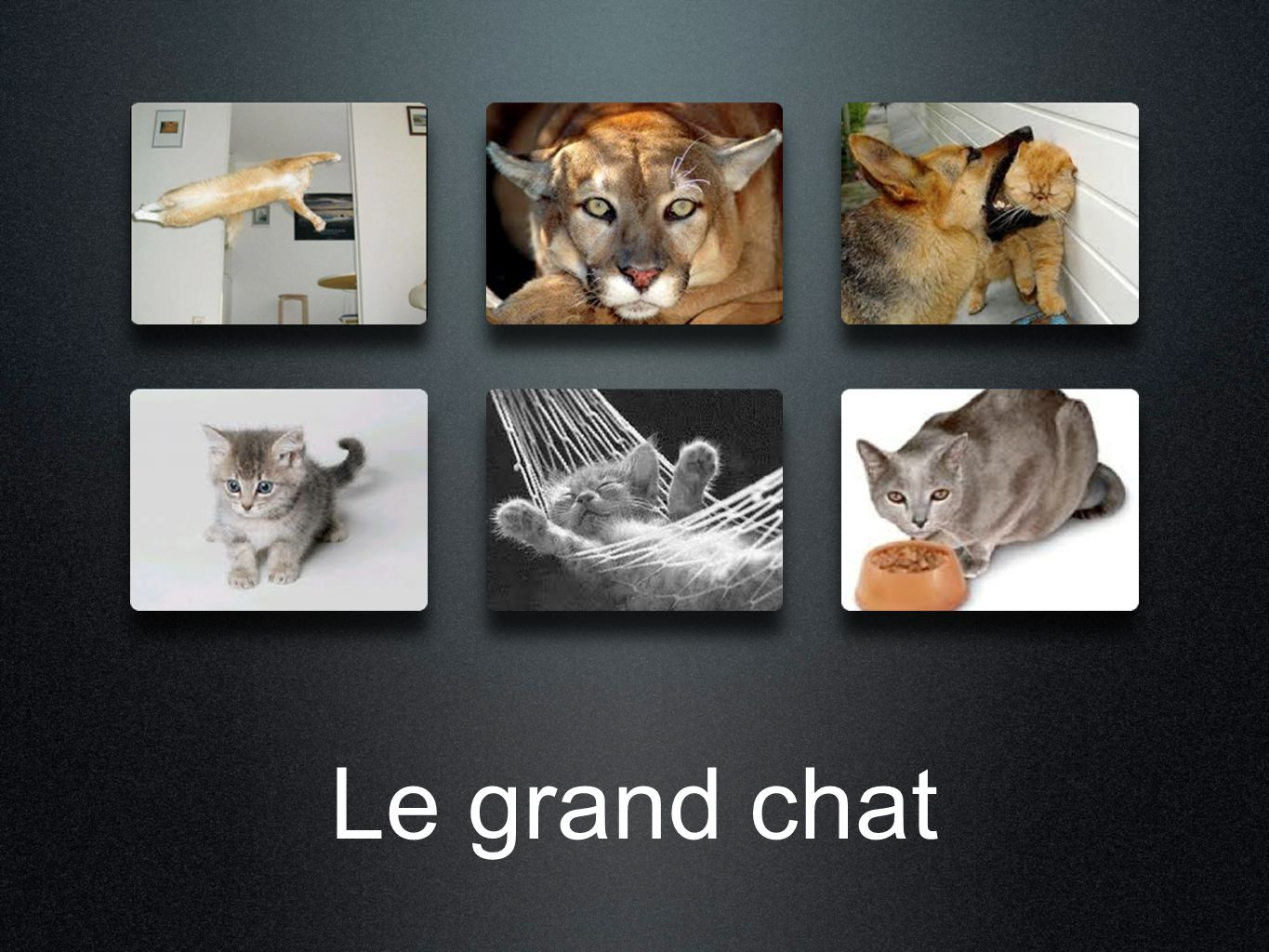 Le grand chat