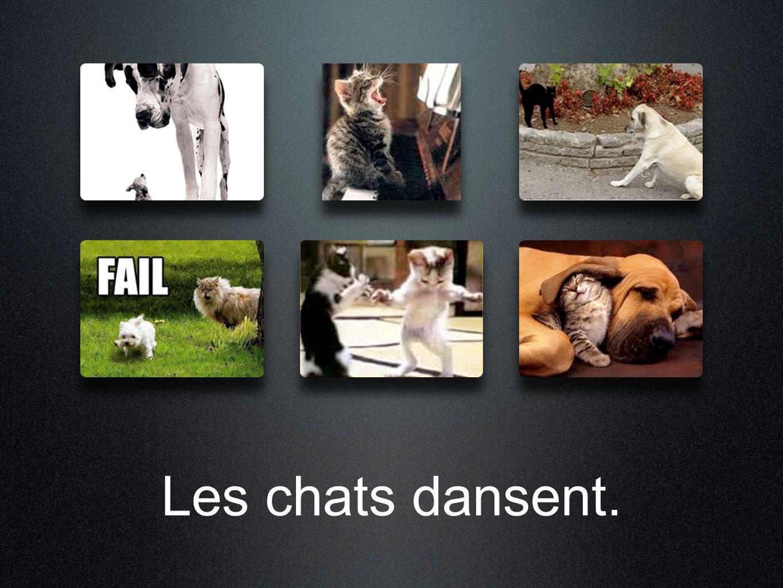 Les chats dansent.