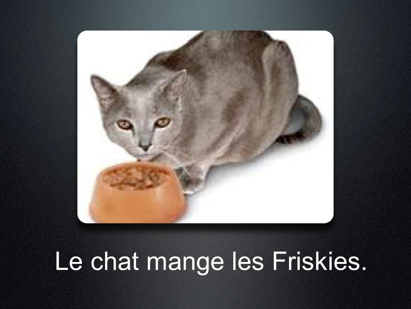 Le chat mange les Friskies.