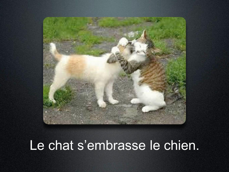 Le chat s'embrasse le chien.