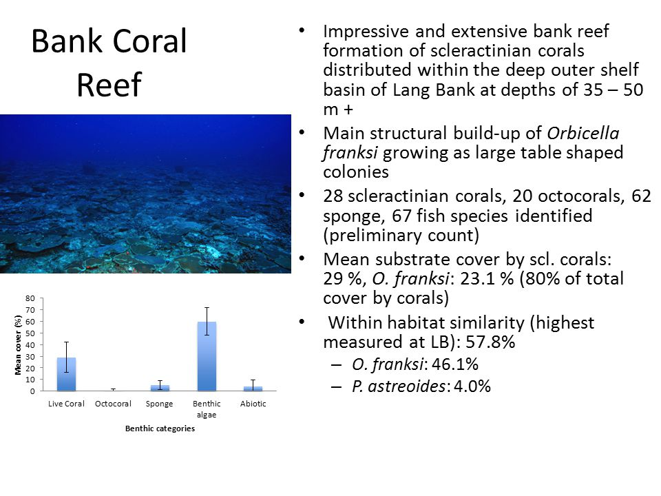 Bank Coral Reef Impressive and extensive bank reef formation of scleractinian corals distributed within the deep outer shelf basin of Lang Bank at depths of 35 – 50 m + Main structural build-up of Orbicella franksi growing as large table shaped colonies 28 scleractinian corals, 20 octocorals, 62 sponge, 67 fish species identified (preliminary count) Mean substrate cover by scl.