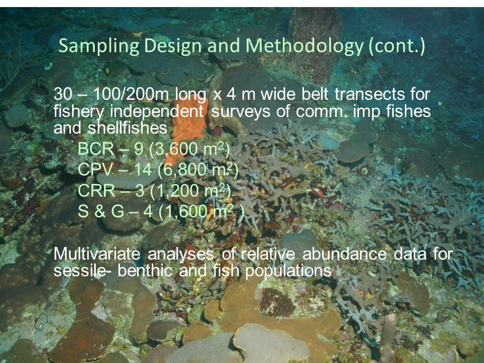 Sampling Design and Methodology (cont.) 30 – 100/200m long x 4 m wide belt transects for fishery independent surveys of comm.