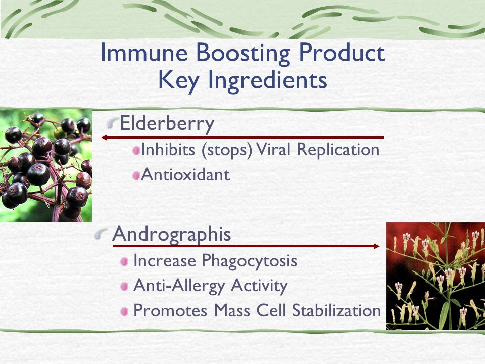 Immune Boosting Product Key Ingredients Andrographis Increase Phagocytosis Anti-Allergy Activity Promotes Mass Cell Stabilization Elderberry Inhibits (stops) Viral Replication Antioxidant