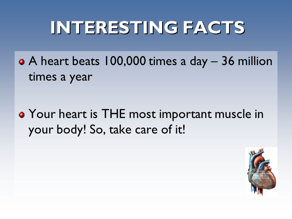 INTERESTING FACTS A heart beats 100,000 times a day – 36 million times a year Your heart is THE most important muscle in your body.