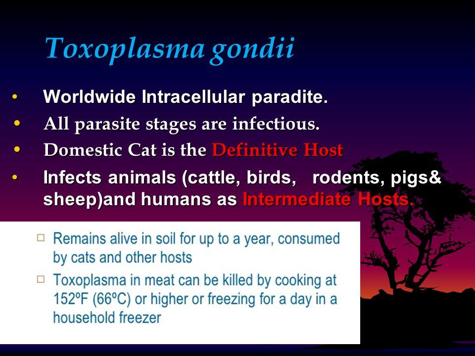 Toxoplasma gondii Worldwide Intracellular paradite.Worldwide Intracellular paradite. All parasite stages are infectious. All parasite stages are infec
