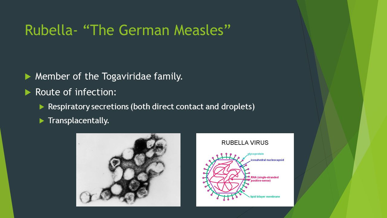 """Rubella- """"The German Measles""""  Member of the Togaviridae family.  Route of infection:  Respiratory secretions (both direct contact and droplets) """