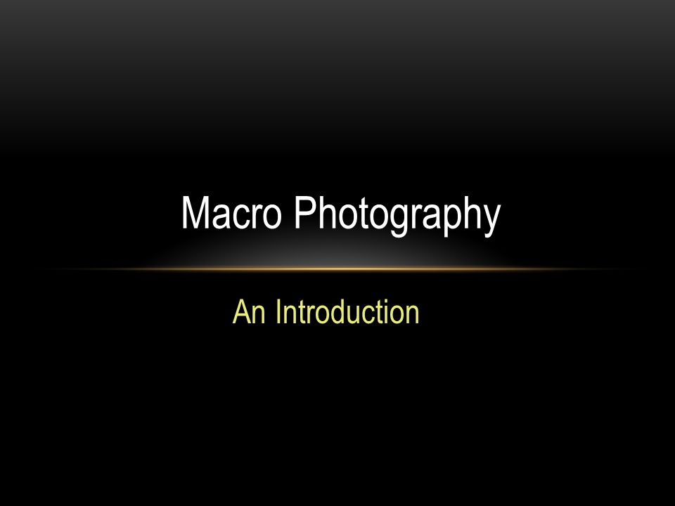 An Introduction Macro Photography