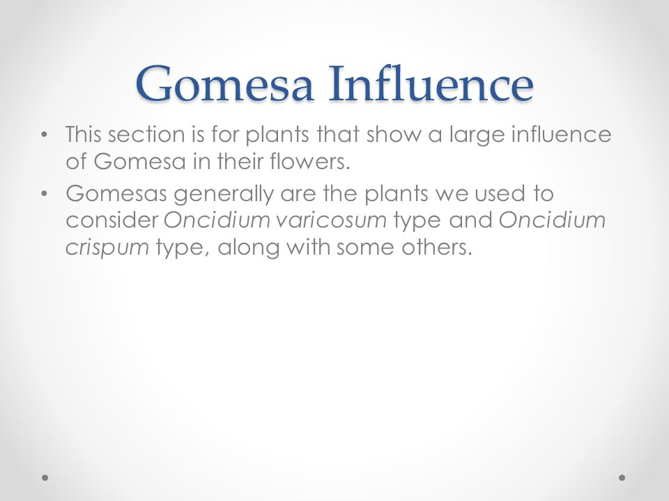 Gomesa Influence This section is for plants that show a large influence of Gomesa in their flowers.