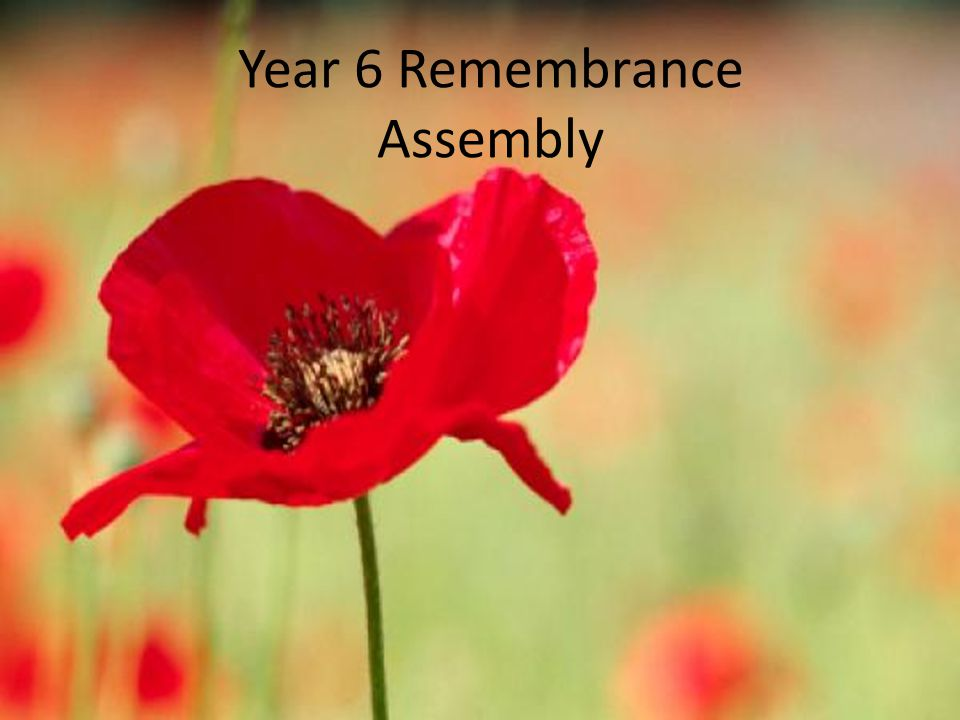 Welcome to Year 6's Remembrance assembly.