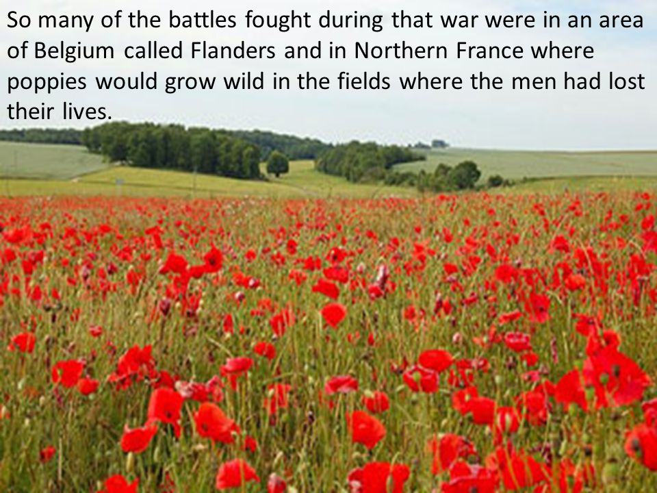 So many of the battles fought during that war were in an area of Belgium called Flanders and in Northern France where poppies would grow wild in the fields where the men had lost their lives.