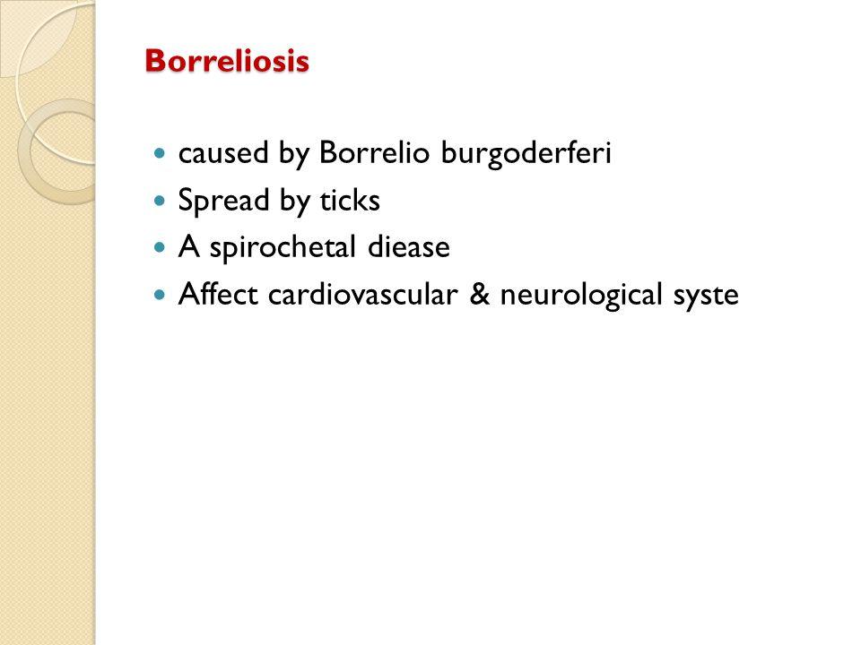 Borreliosis caused by Borrelio burgoderferi Spread by ticks A spirochetal diease Affect cardiovascular & neurological syste