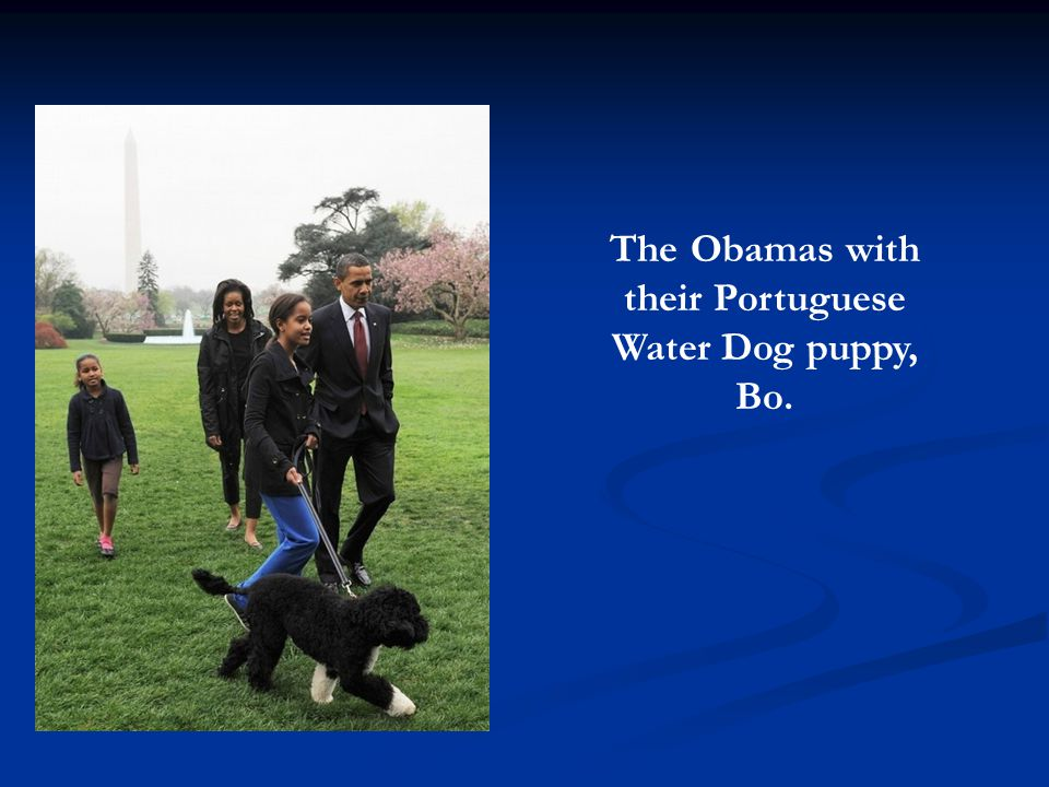 The Obamas with their Portuguese Water Dog puppy, Bo.