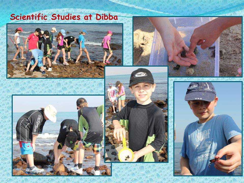Scientific Studies at Dibba