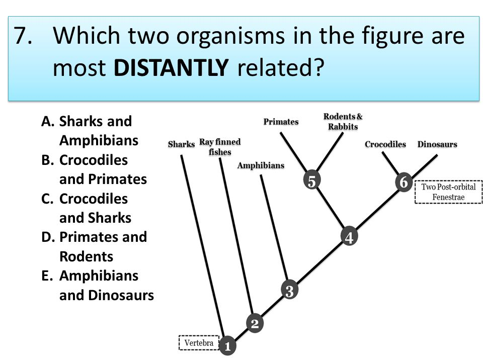 8.The correct order for the levels of classification is A.domain, kingdom, family, order, genus, species B.domain, kingdom, phylum, class, order, family, genus, species C.kingdom, phylum, order, class, family, genus, species D.domain, kingdom, phylum, order, family, species, genus E.species, family, genus, order, phylum, class, domain, kingdom