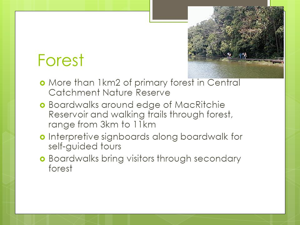 Forest  More than 1km2 of primary forest in Central Catchment Nature Reserve  Boardwalks around edge of MacRitchie Reservoir and walking trails through forest, range from 3km to 11km  Interpretive signboards along boardwalk for self-guided tours  Boardwalks bring visitors through secondary forest