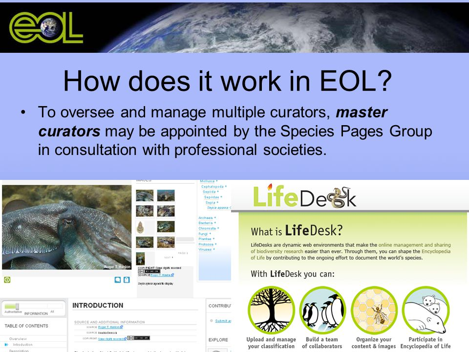How does it work in EOL? To oversee and manage multiple curators, master curators may be appointed by the Species Pages Group in consultation with pro