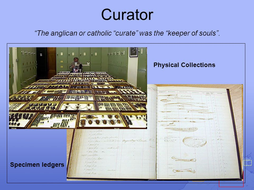 Curator The anglican or catholic curate was the keeper of souls .