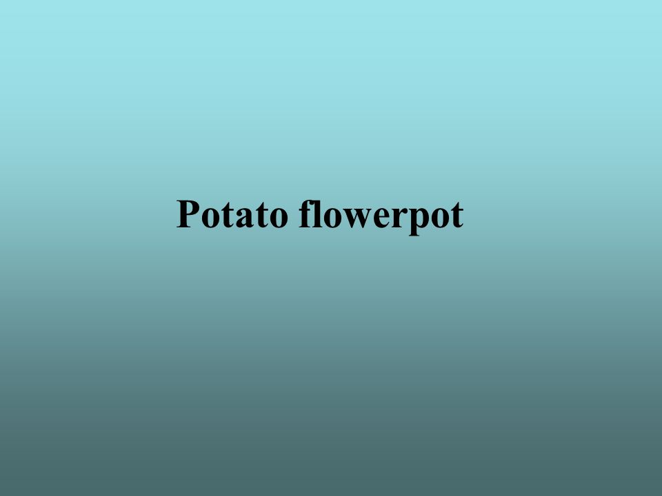 Potato flowerpot