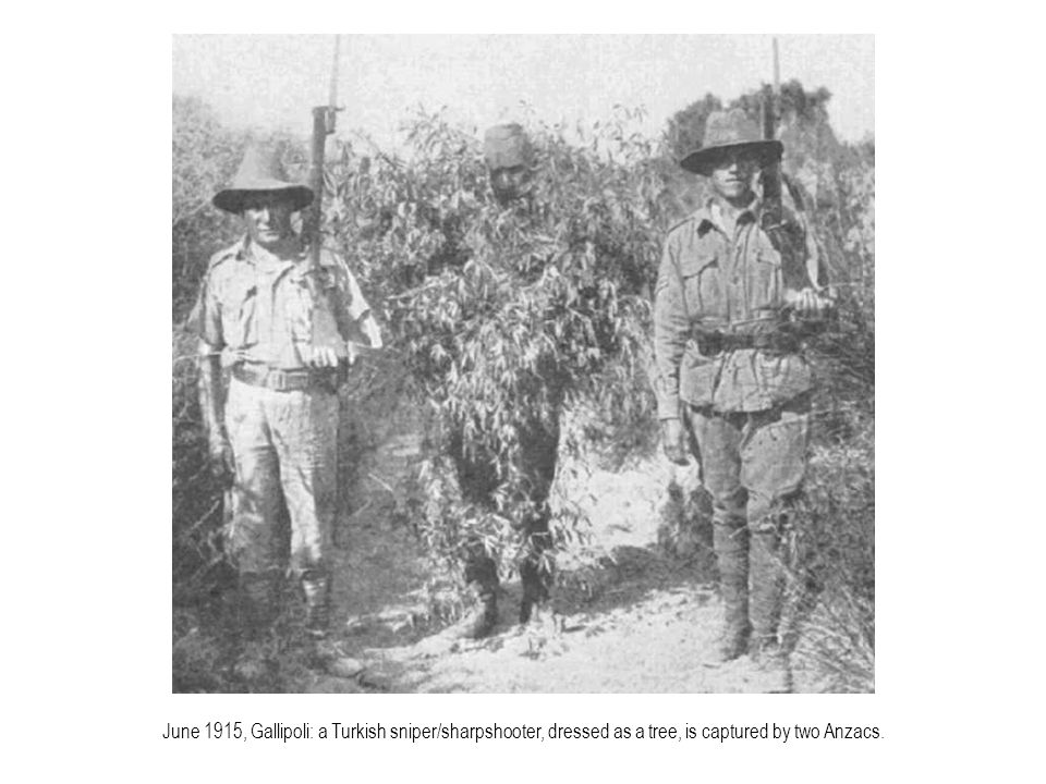 June 1915, Gallipoli: a Turkish sniper/sharpshooter, dressed as a tree, is captured by two Anzacs.