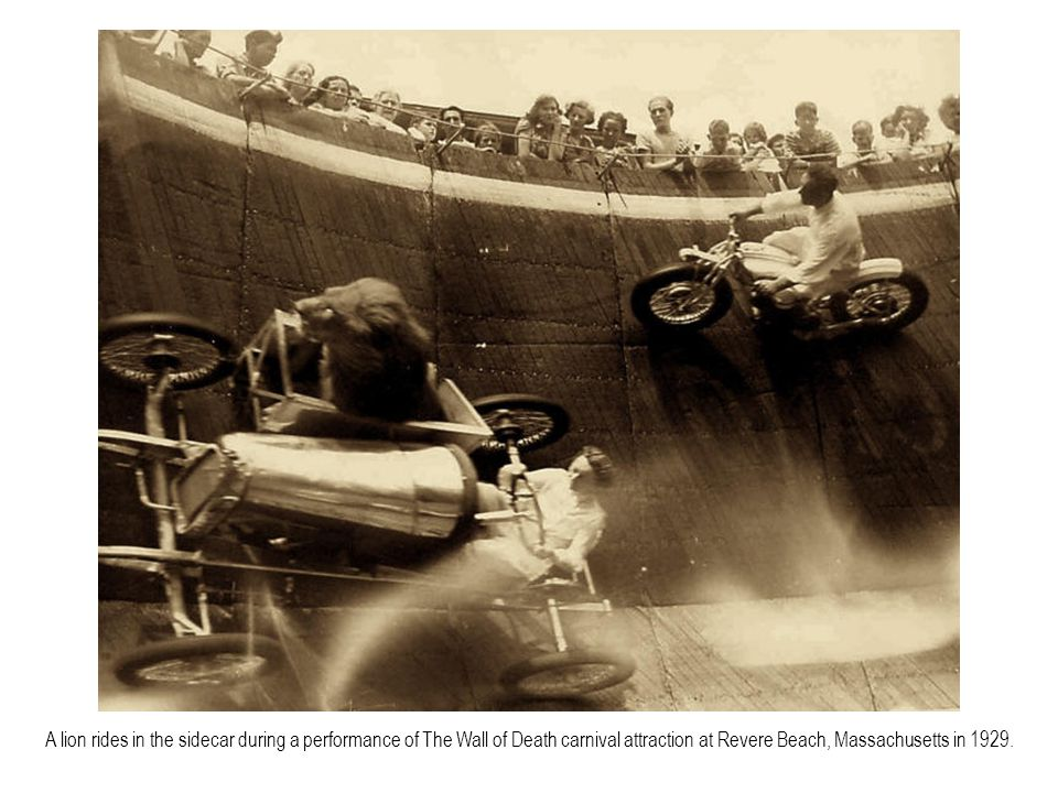 A lion rides in the sidecar during a performance of The Wall of Death carnival attraction at Revere Beach, Massachusetts in 1929.