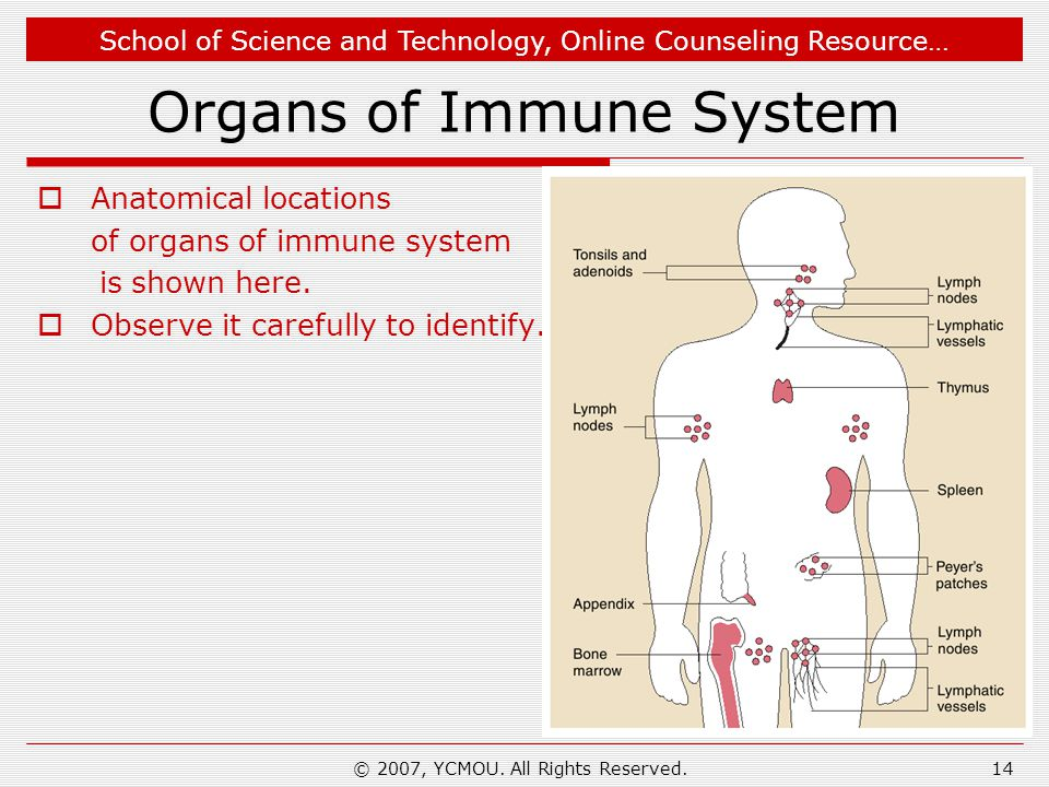 School of Science and Technology, Online Counseling Resource… © 2007, YCMOU. All Rights Reserved.14 Organs of Immune System  Anatomical locations of