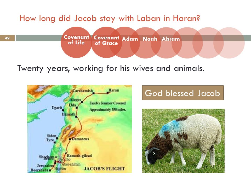 How long did Jacob stay with Laban in Haran. 49 Twenty years, working for his wives and animals.
