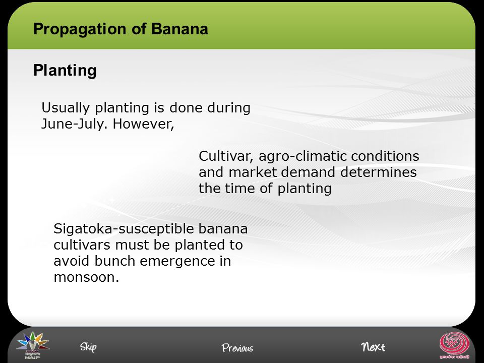 Propagation of Banana Planting Usually planting is done during June-July. However, Cultivar, agro-climatic conditions and market demand determines the