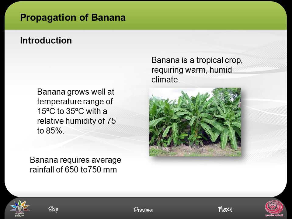 Propagation of Banana Introduction Banana is a tropical crop, requiring warm, humid climate. Banana grows well at temperature range of 15ºC to 35ºC wi