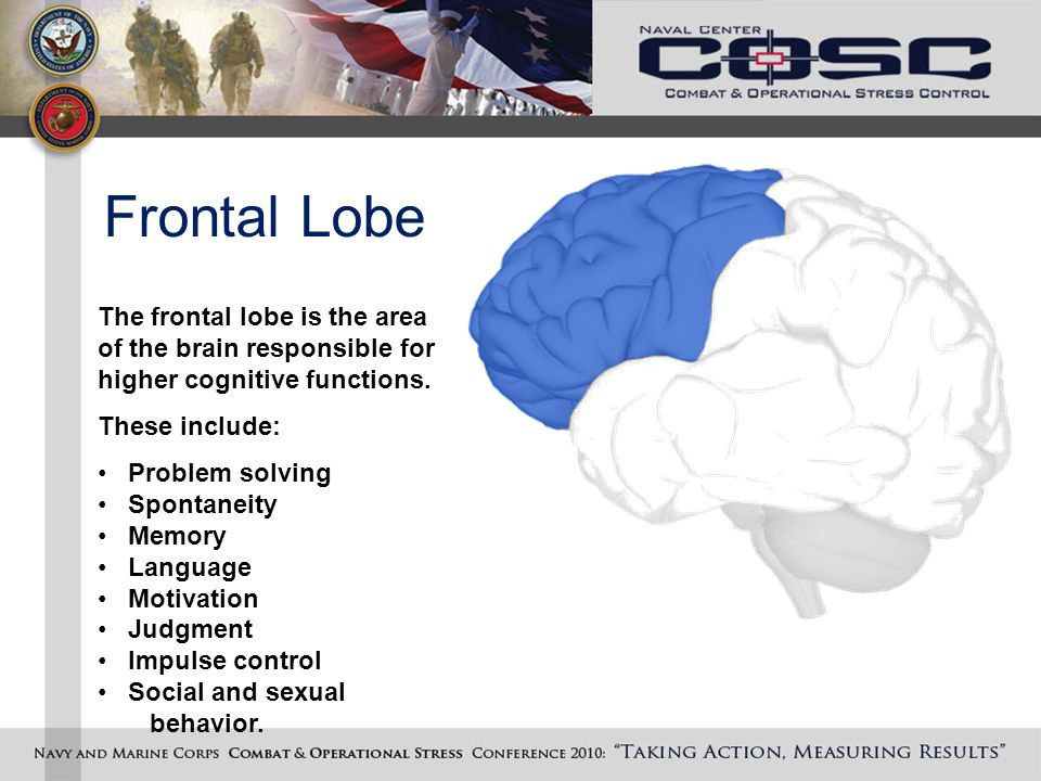 Frontal Lobe The frontal lobe is the area of the brain responsible for higher cognitive functions.