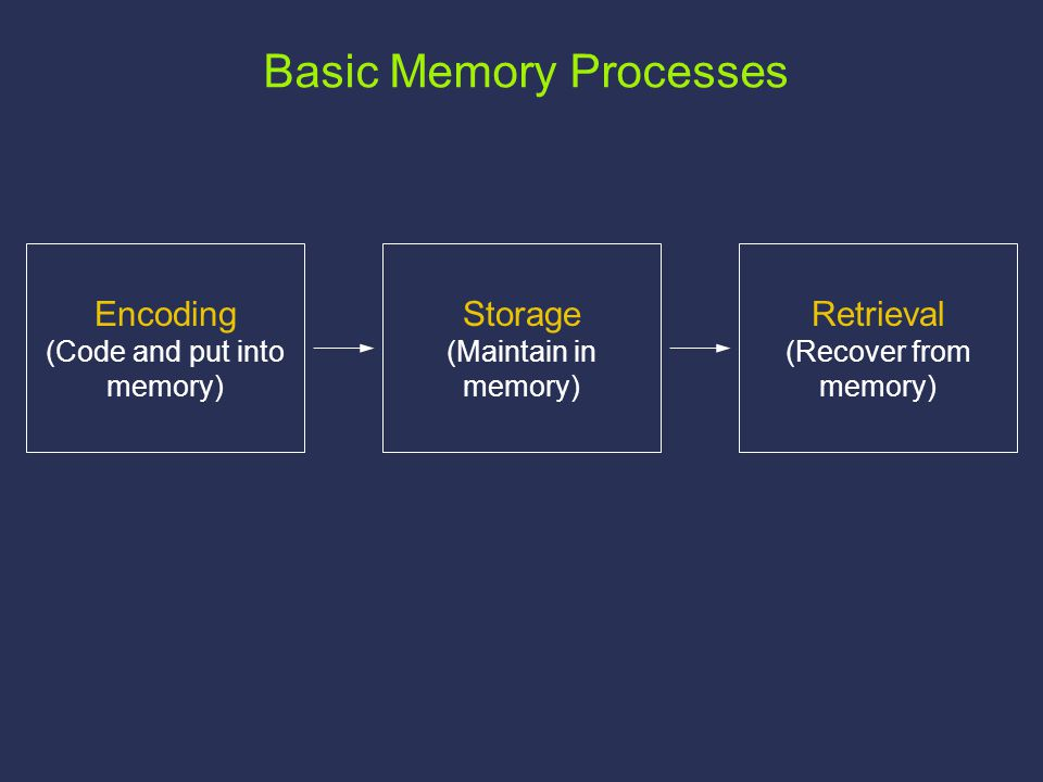 Storage (Maintain in memory) Retrieval (Recover from memory) Encoding (Code and put into memory) Basic Memory Processes