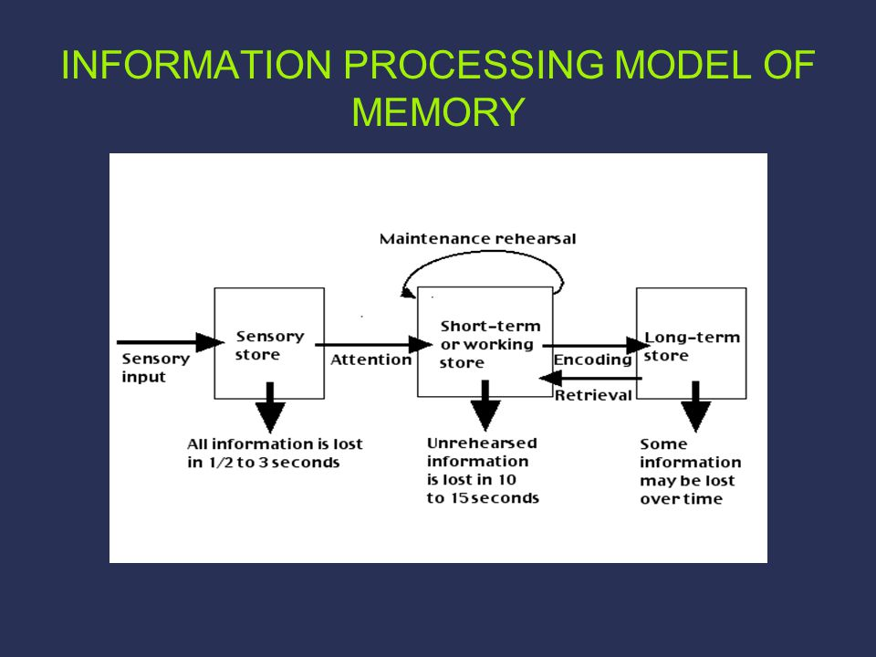 INFORMATION PROCESSING MODEL OF MEMORY