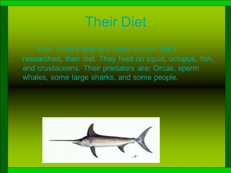 Swordfish Life Cycle Hmmm…. What should I tell you about now.