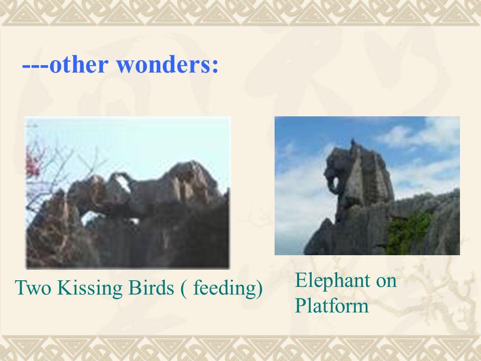 Two Kissing Birds ( feeding) Elephant on Platform ---other wonders: