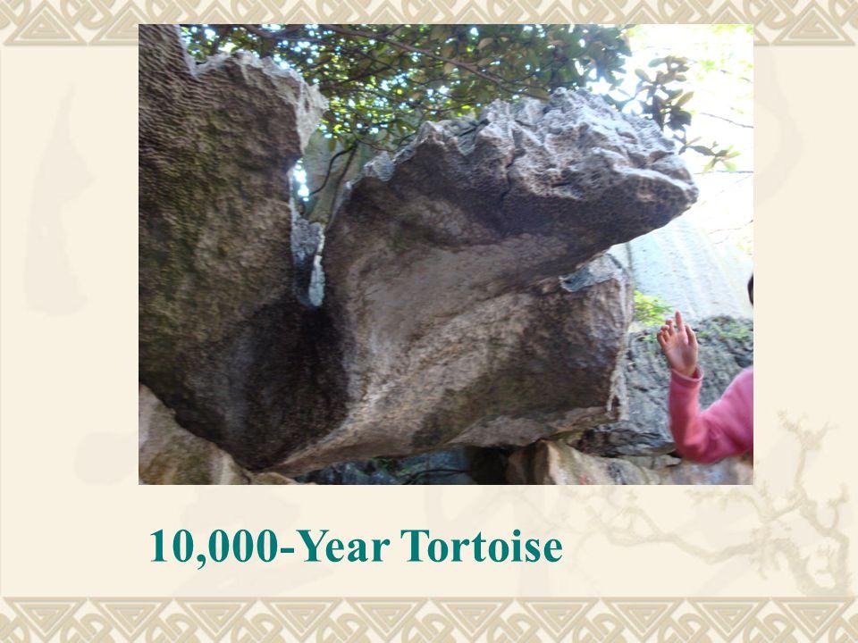 10,000-Year Tortoise