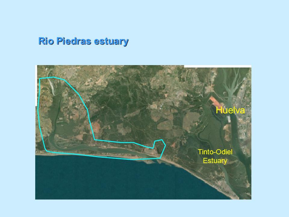 Rio Piedras estuary Huelva Tinto-Odiel Estuary