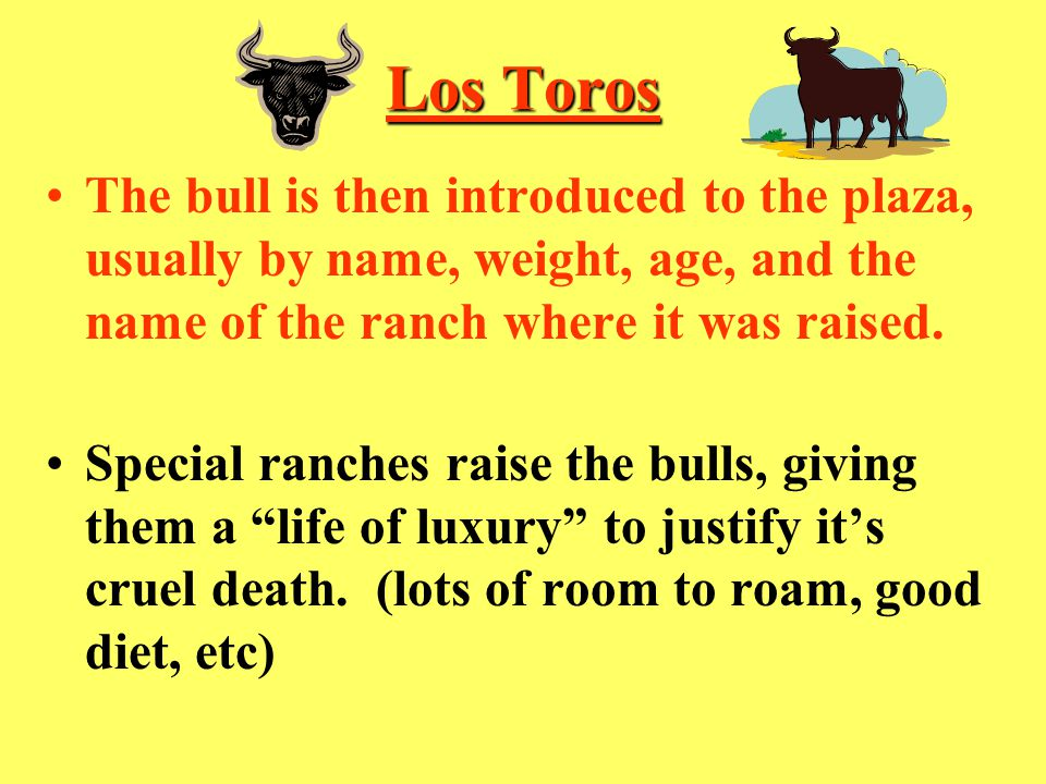 Los Toros The bull is then introduced to the plaza, usually by name, weight, age, and the name of the ranch where it was raised.