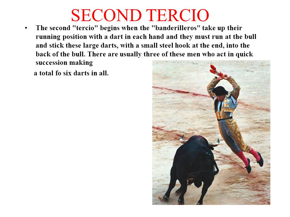 SECOND TERCIO The second tercio begins when the banderilleros take up their running position with a dart in each hand and they must run at the bull and stick these large darts, with a small steel hook at the end, into the back of the bull.