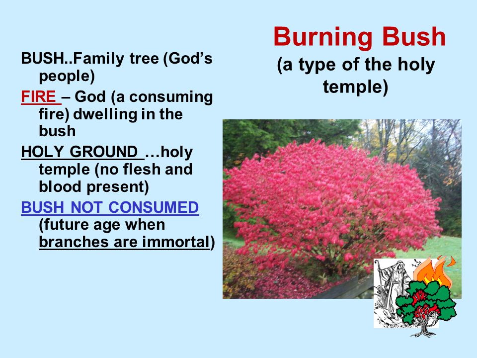 Burning Bush (a type of the holy temple) BUSH..Family tree (God's people) FIRE – God (a consuming fire) dwelling in the bush HOLY GROUND …holy temple (no flesh and blood present) BUSH NOT CONSUMED (future age when branches are immortal)