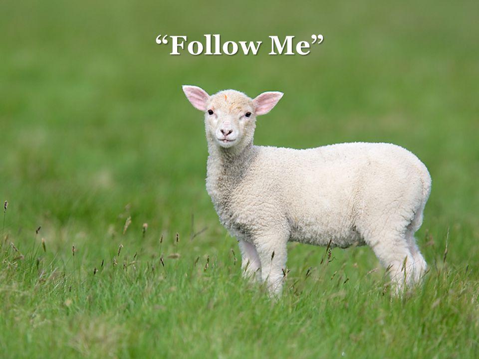 """Follow Me"""