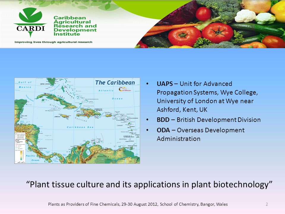 UAPS – Unit for Advanced Propagation Systems, Wye College, University of London at Wye near Ashford, Kent, UK BDD – British Development Division ODA – Overseas Development Administration Plants as Providers of Fine Chemicals, 29-30 August 2012, School of Chemistry, Bangor, Wales2 Plant tissue culture and its applications in plant biotechnology