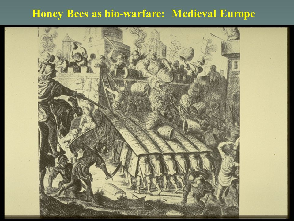 Honey Bees as bio-warfare: Medieval Europe