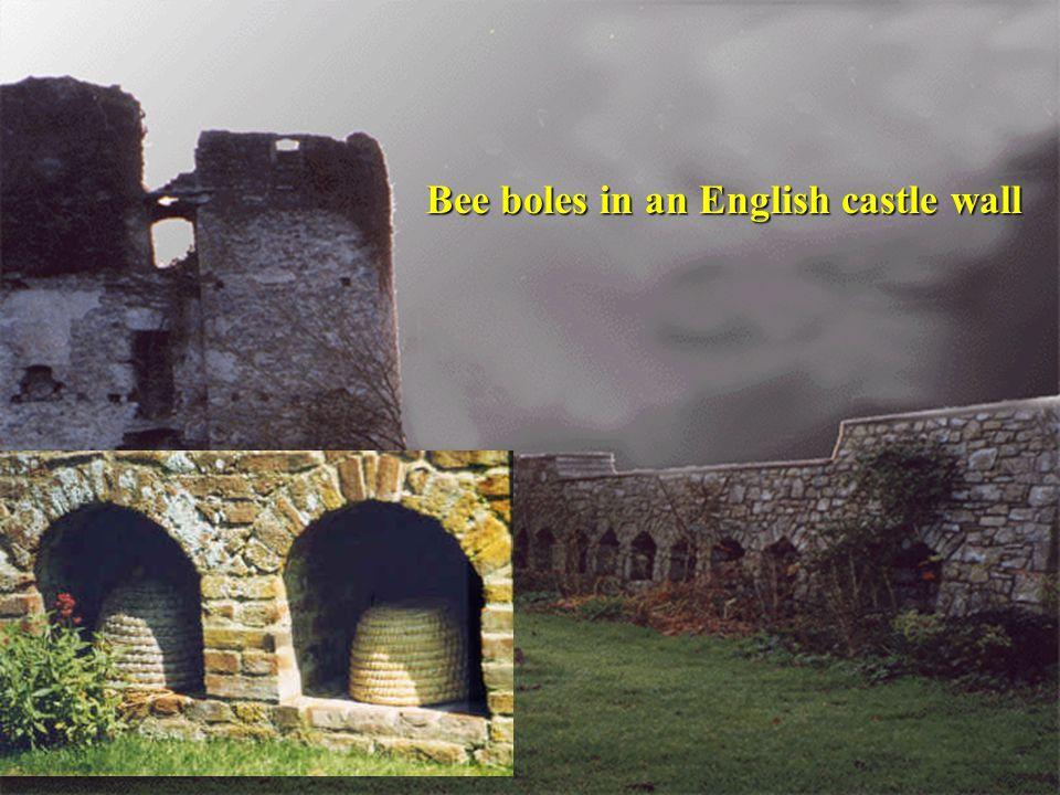 Bee boles in an English castle wall