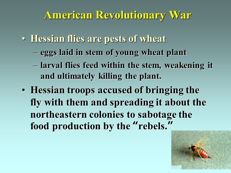 American Revolutionary War Hessian flies are pests of wheatHessian flies are pests of wheat –eggs laid in stem of young wheat plant –larval flies feed within the stem, weakening it and ultimately killing the plant.