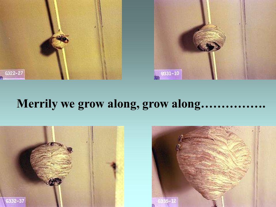Merrily we grow along, grow along…………….