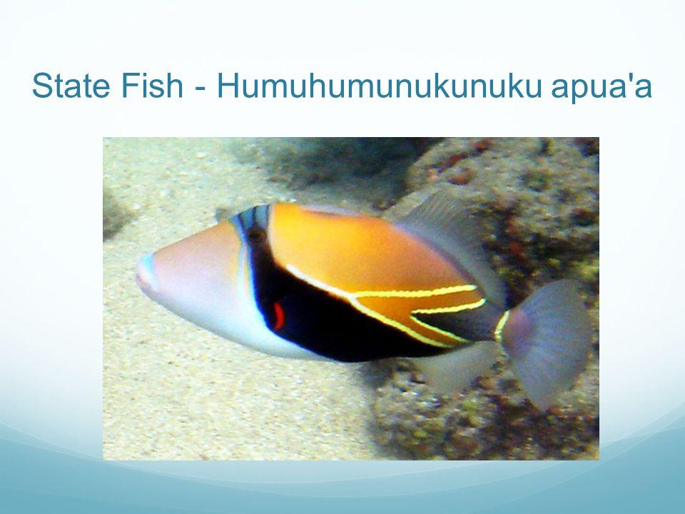 State Fish - Humuhumunukunuku apua a