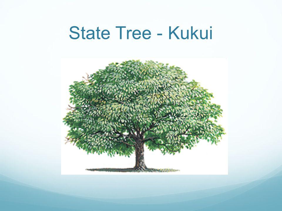 State Tree - Kukui