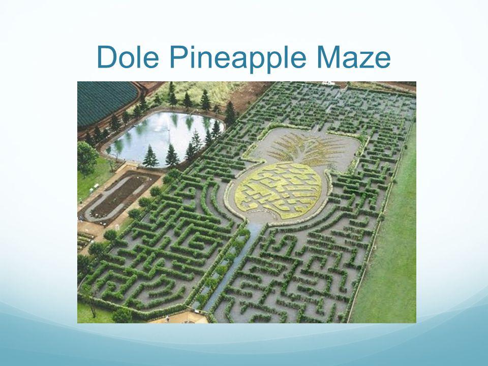 Dole Pineapple Maze