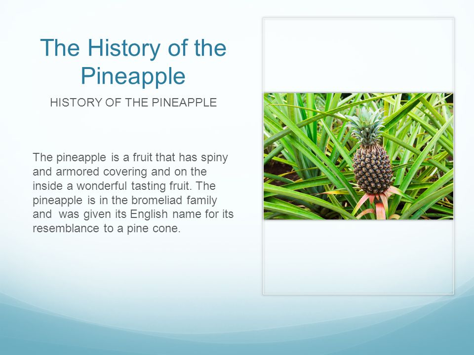 The History of the Pineapple HISTORY OF THE PINEAPPLE The pineapple is a fruit that has spiny and armored covering and on the inside a wonderful tasting fruit.